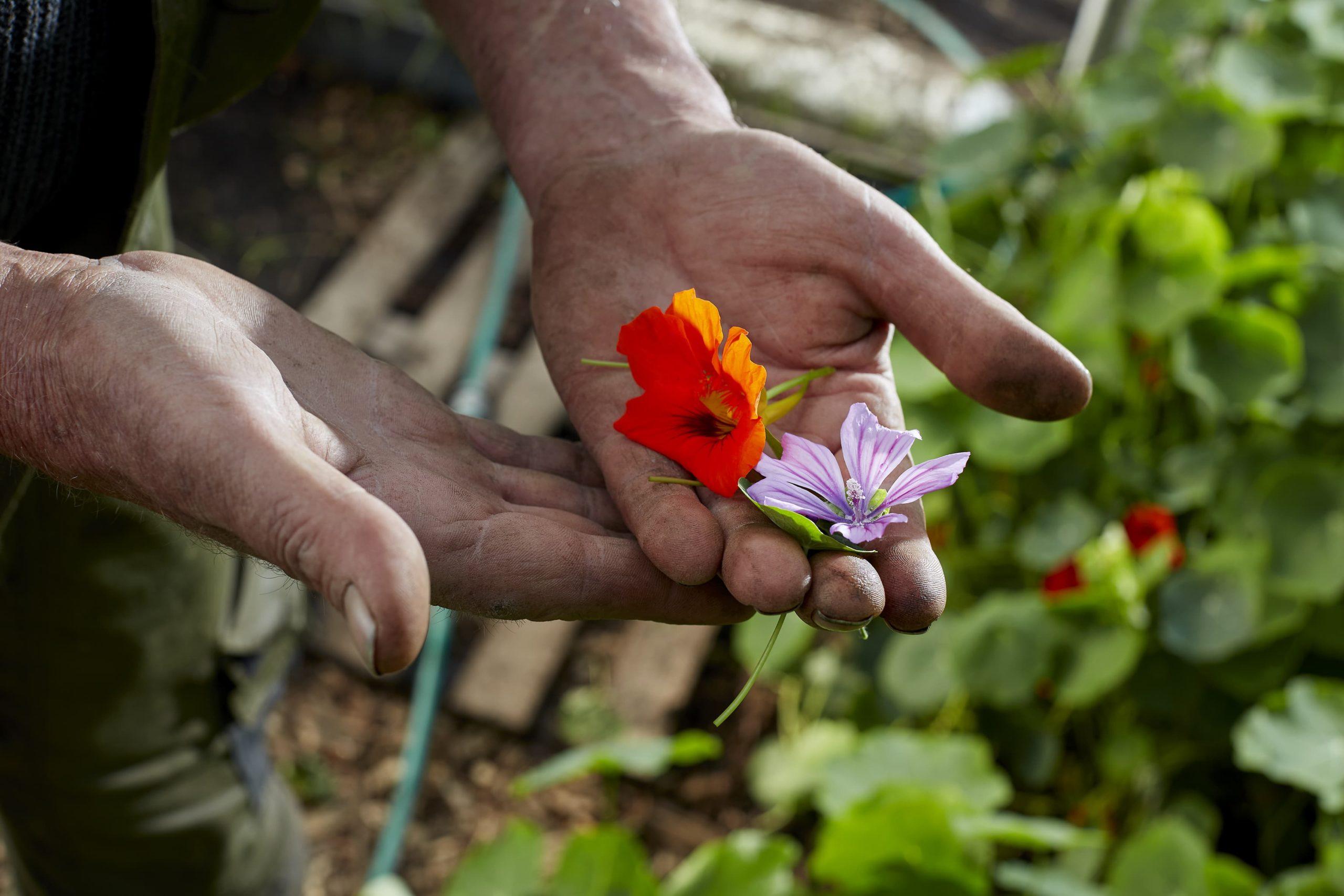 Smaakmakers uit eigen tuin